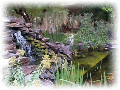 Mr. Gwell's  Beautiful Koi Pond in the Las Vegas Desert